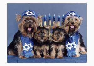 6-chanukah-dogs-590sm101812[1]