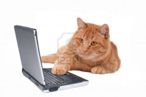 8415433-smart-cat-working-at-the-computer[1]