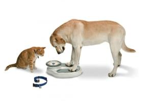 DogStandingOnScale[1]