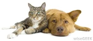 dog-and-cat[1]