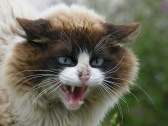 image-angry-cat-face-dark-souls-wiki_419487